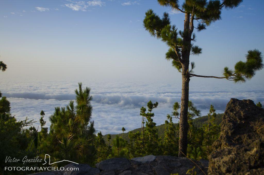 Mar de nubes desde la corona forestal de Tenerife